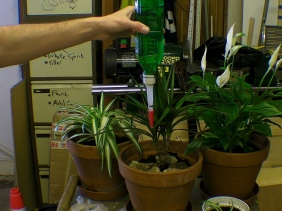 Cleaning Workshop Air With Plants